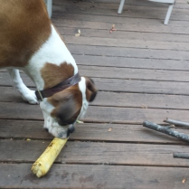 Nory gets a grilled shelled corn cob.